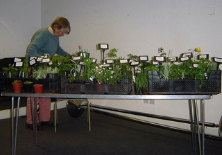 Patricia Elkington with her plants. Photos by Pauline Powell